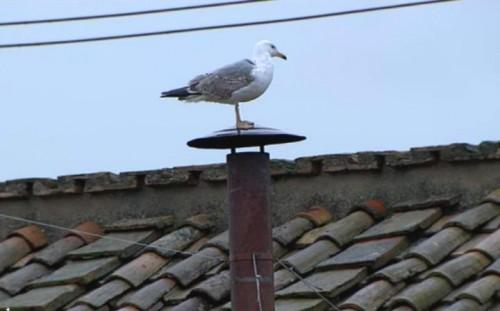 gabbiano1.jpg